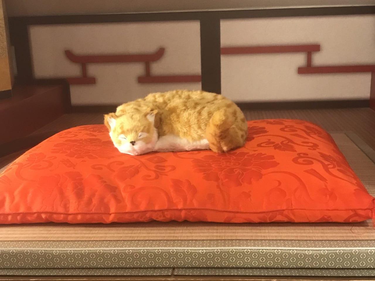満天の湯の飼い猫