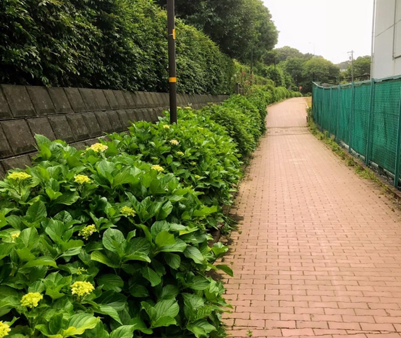 紫陽花ロードのメインストリート