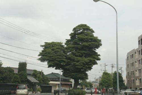 境木のハートの木